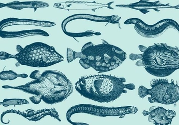 Rare Aquatic Creatures - Free vector #395379