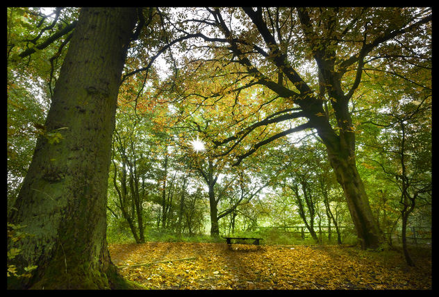 Autumnal resting place - Free image #396269