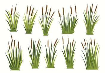 Free Cattails Vector - Free vector #397239