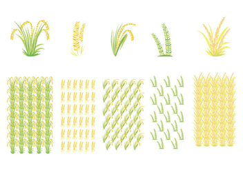 Rice Field and Rice Pattern Vectors - vector gratuit #397459