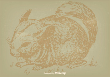 Vintage Chinchilla Illustration - бесплатный vector #398739