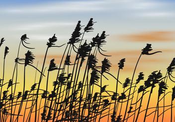 Reeds On Sunset Background Vector - Free vector #400789