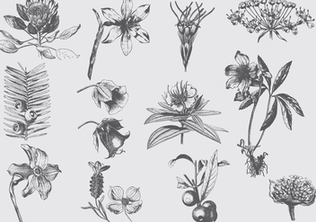 Gray Exotic Flower Illustrations - vector gratuit #401449