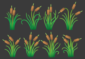 Cattails Vector Icons - vector gratuit #401869