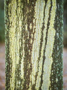 Tree trunk pattern - image gratuit #402359