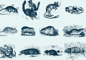 Blue Rodent Illustrations - бесплатный vector #402689