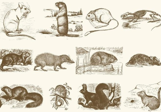 Sepia Rodent Illustrations - Kostenloses vector #402699