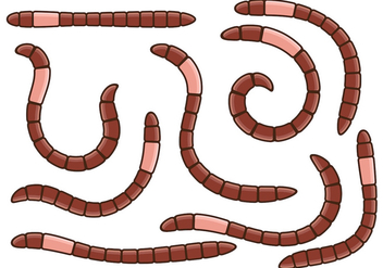 Earthworm Vector - бесплатный vector #403289
