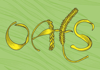 Free Oats Vector Illustration - Free vector #405389