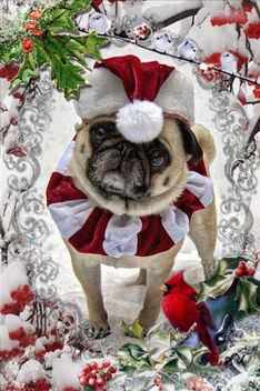 Pug Christmas Card - Kostenloses image #406199