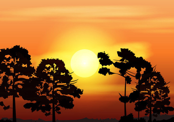 Silhouette Of Araucaria At The Afternoon - vector gratuit #406509