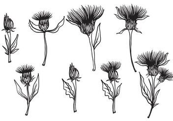 Free Hand Drawn Thistle Vector - бесплатный vector #406709