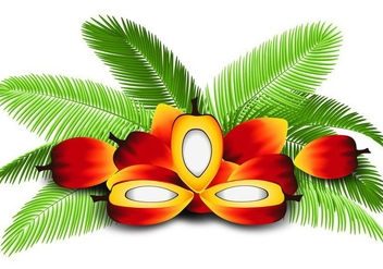 Illustration of Palm Oil - Free vector #408749
