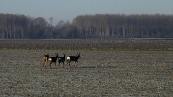 Deer and geese - Kostenloses image #409659