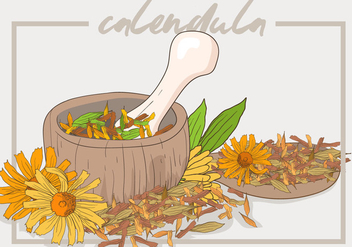 Calendula Cosmetic Recipe - Free vector #410979
