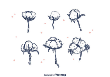 Hand Drawn Cotton Flower - vector gratuit #411599