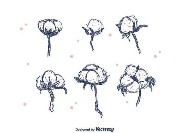 Hand Drawn Cotton Flower - бесплатный vector #411599