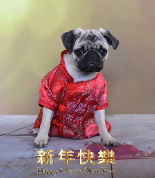 Happy Chinese New Year - image #413049 gratis