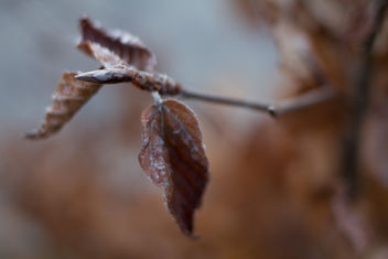 Morning Frost - image gratuit #413169
