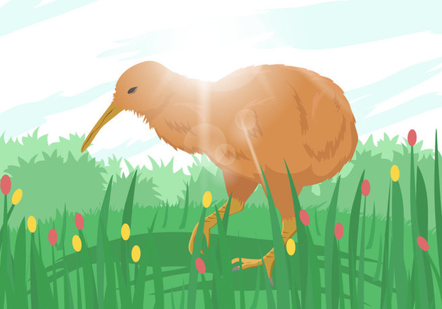 Kiwi Bird Illustration - бесплатный vector #414549