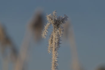 White frost - Hoarfrost - Ruige rijp - image gratuit #415979