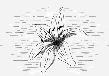 Free Vector Lily Flower Illustration - бесплатный vector #419019