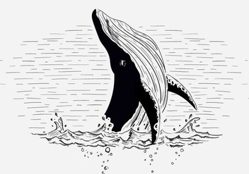 Free Vector Whale Illustration - vector gratuit #419029