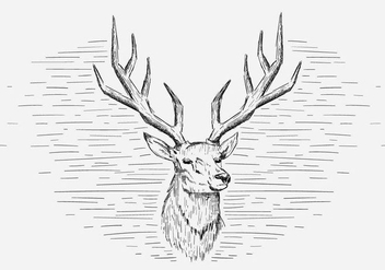 Free Vector Deer Illustration - бесплатный vector #419039
