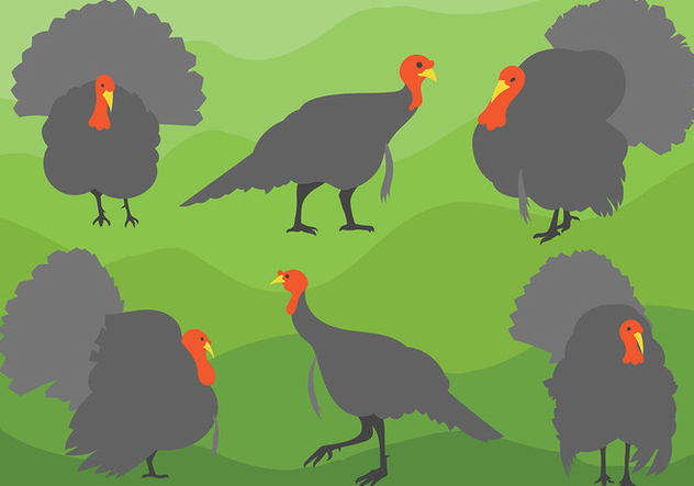 Free Wild Turkey Icons Vector - Free vector #420149