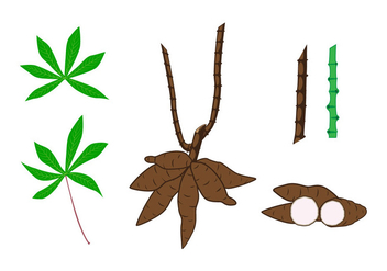 Cassava Plant Element Vectors - бесплатный vector #424129