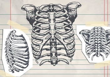 Hand Drawn Ribcage - Free vector #425339