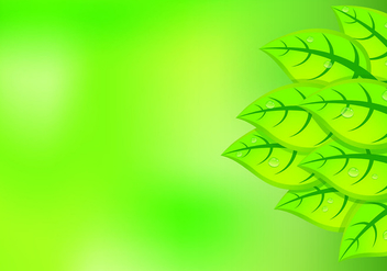 Background Of Natural Green Leaves - vector gratuit #427619