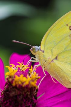 Yellow butterfly on flower - image #428739 gratis