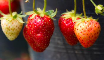 Strawberry#fruit - image #428749 gratis