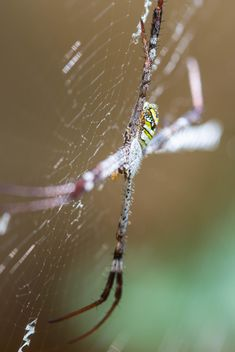Close-up of spider on cobweb - Free image #428769
