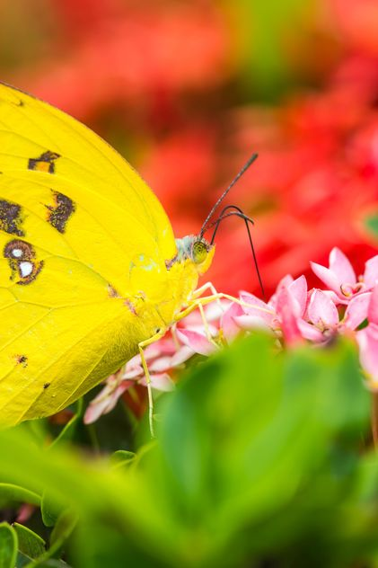 yellow butterfly - бесплатный image #428799