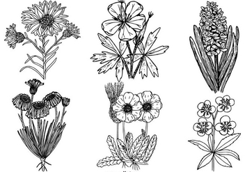 Vinatge Black and White Flower Collection - vector gratuit #429279