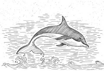 Free Hand Drawn Vector Dolphin Illustration - Free vector #429469