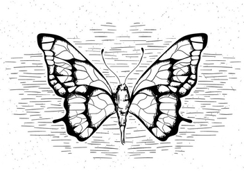 Free Hand Drawn Vector Butterfly - vector #429479 gratis
