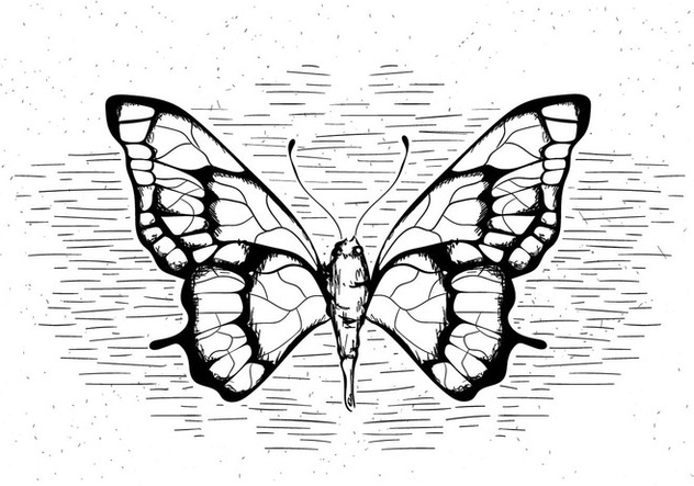 Free Hand Drawn Vector Butterfly - бесплатный vector #429479