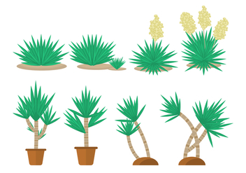 Free Yucca Plant Collections - Free vector #429579