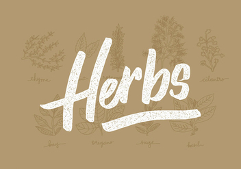 Fresh Herbs Line Drawings - Free vector #430999