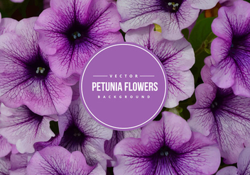 Petunia Vector Background - vector gratuit #431029