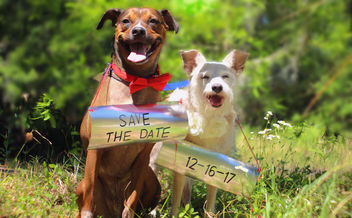 Save The Date - Free image #431359