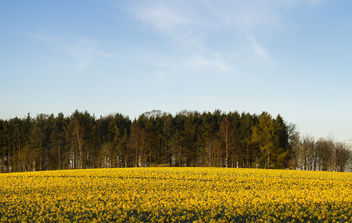 Spring fields in Scotland. - Free image #432399