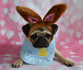 First Easter For Boo Lefou - image gratuit #432909