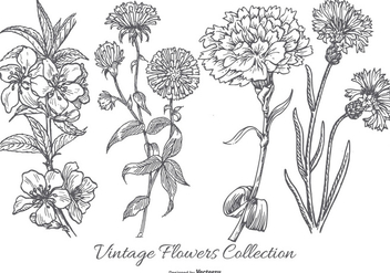 Vintage Flower Collection - vector gratuit #433059