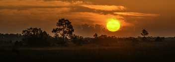 An Everglades Sunrise - Free image #433119