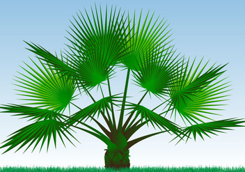 Single Palmetto Plant Vector - Kostenloses vector #433269