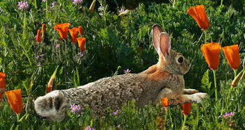 Bunny Spring - Free image #434399